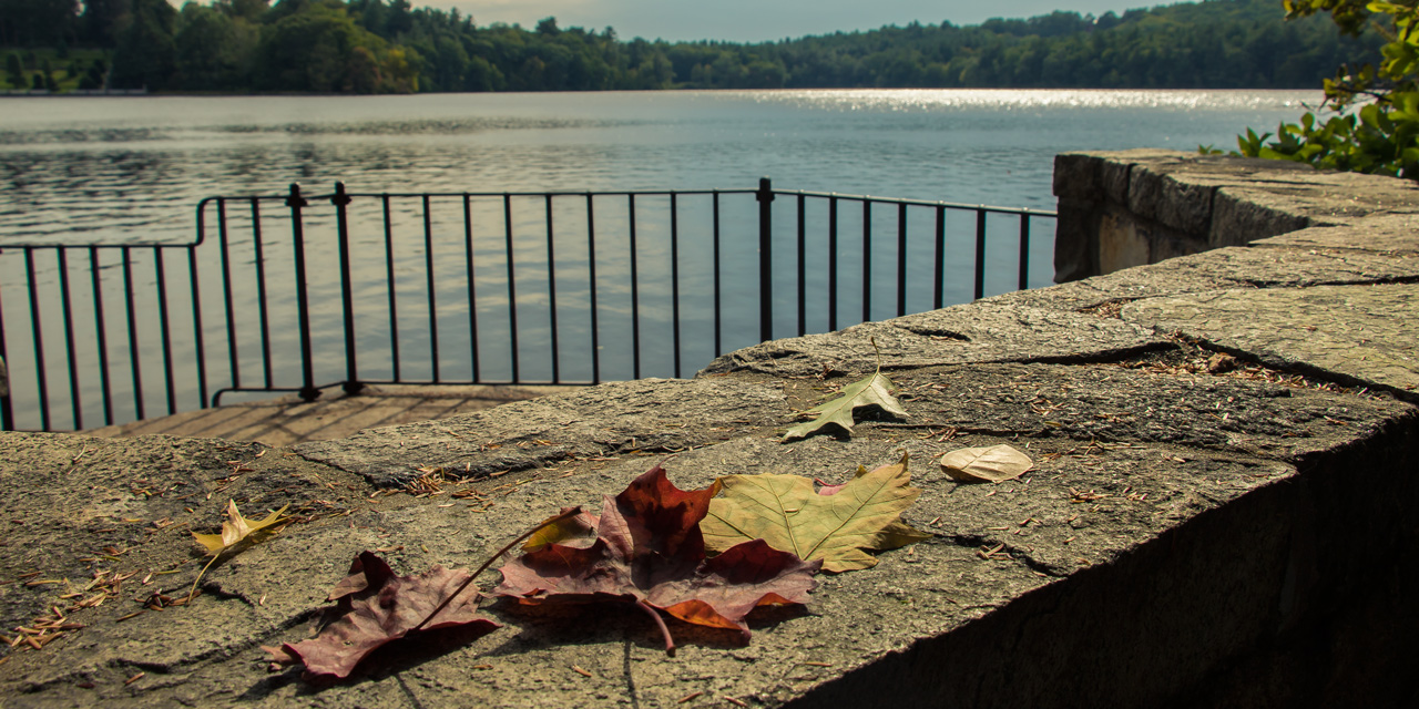 Fallen autumn leaves with a view of Lake Waban