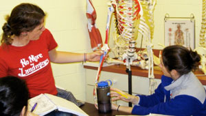 studying a skeleton in sports medicine class