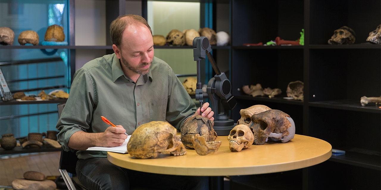 Adam van Arsdale studying skulls
