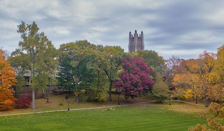 campus beauty shot of Galen tower through fall leaves