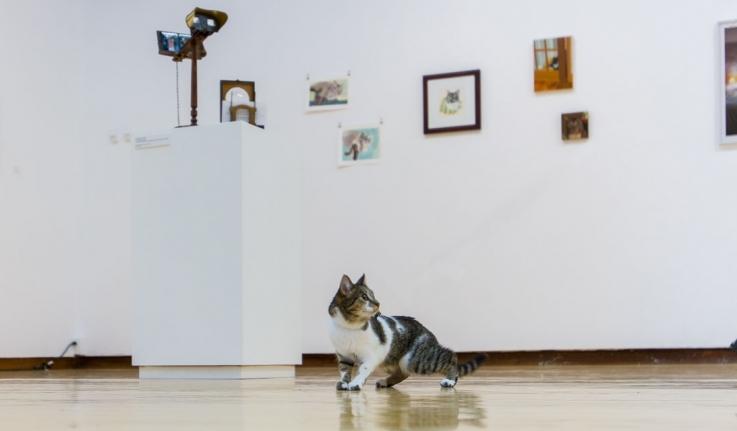 A cat views an art exhibition about cats