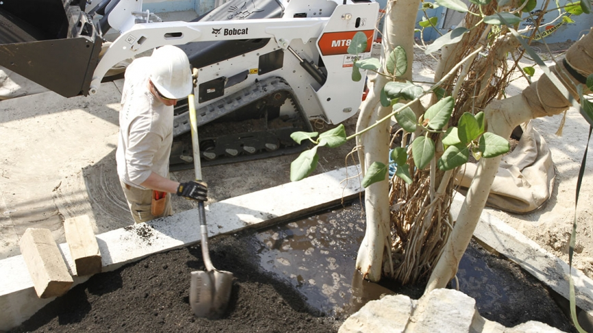 A construction worker fills waters a newly-planted tree.