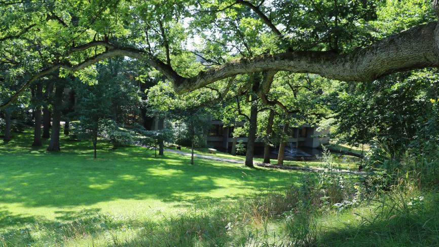 Oak Tree on Severance Hill (August 2018)
