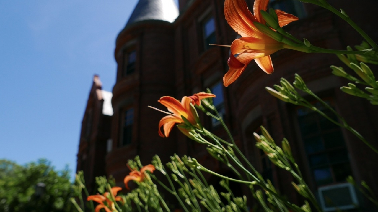 Lilies in front of Billings Hall greet the morning sun of a new day.