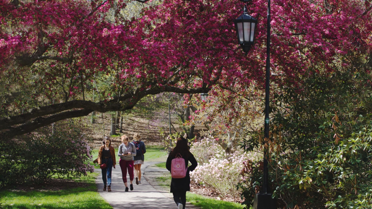 Students walk on a pathway framed by a Wellesley lamp post and pink, blooming trees.
