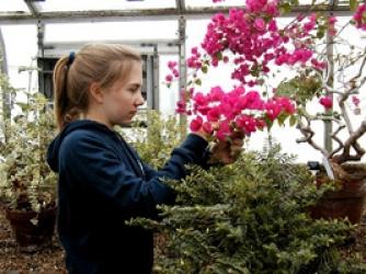 Student studies flowers in greenhouse