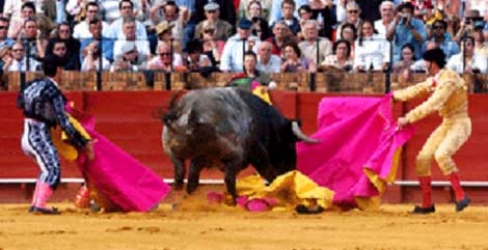 bullfighters with bull